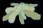 bact_fotosintetica